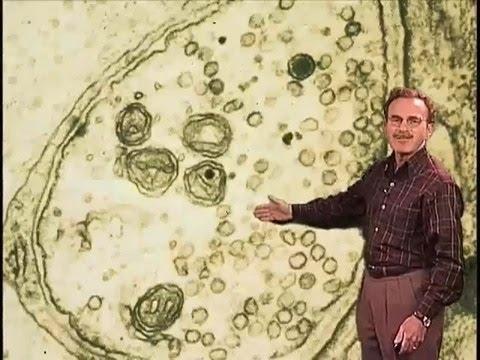 Randy Schekman (Berkeley) Part 1: Studying Protein Secretion in Yeast with English Subtitles
