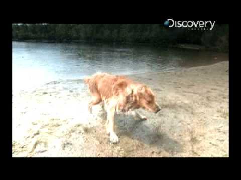 Time Warp - Dog Shake Short