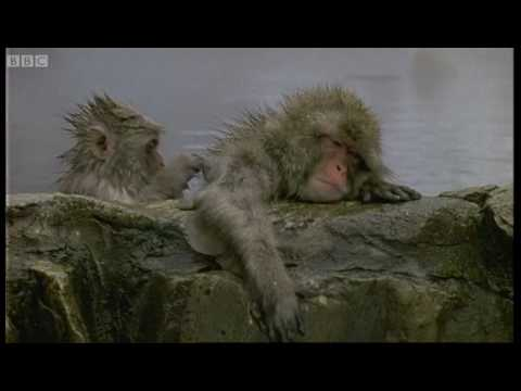 Monkey Health Spa - Cousins - BBC