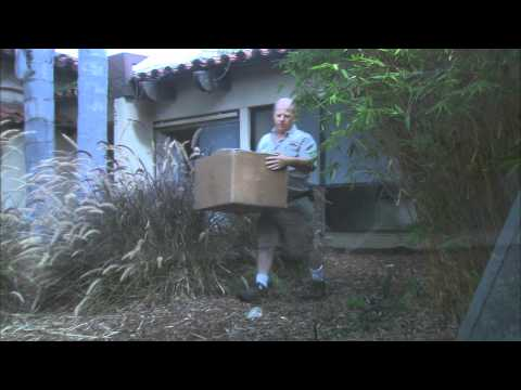 San Diego Zoo Kids - Komodo Dragons