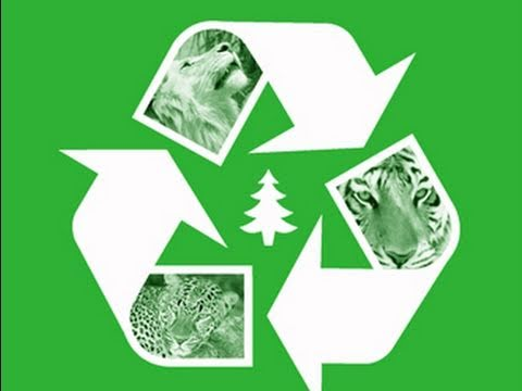 Big Cats GO GREEN! How Tigers Recycle!
