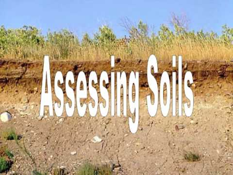 Assessing Soil by Mariz