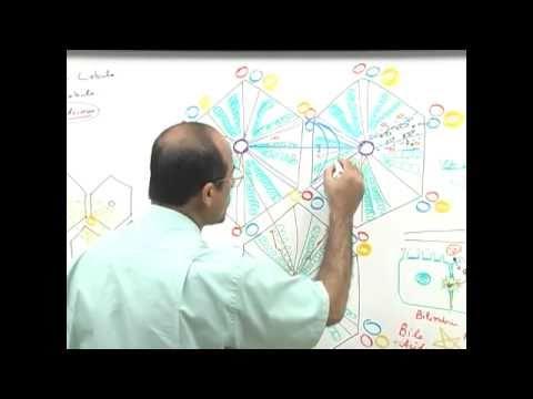 Liver Histology 6/7