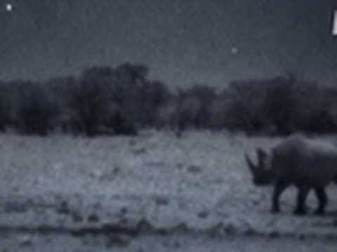 Surrounded by Rhinos at Night | Wild Kingdom