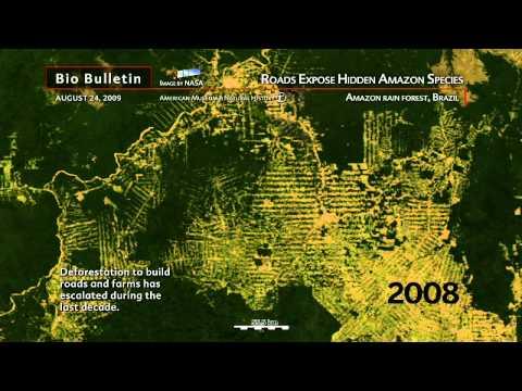 Science Bulletins: Roads Expose Hidden Amazon Species