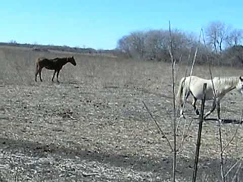 Horses and donkeys in Texas
