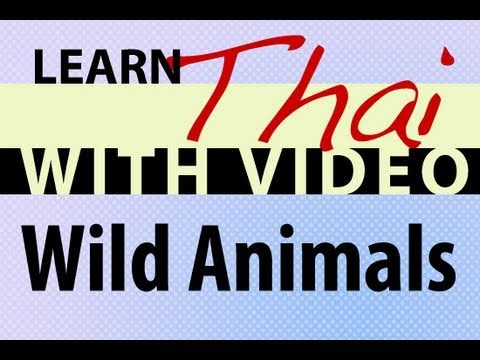 Learn Thai with Video - Wild Animals
