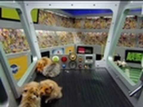 Puppy Bowl VI: One Fast Pug