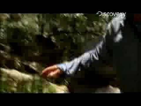 Man vs. Wild - African Savannah Upstream