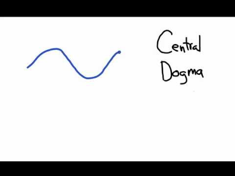The Central Dogma: Transcription and Translation