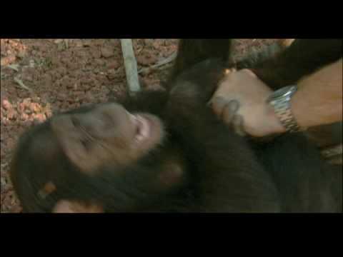 Escape to Chimp Eden - Marco*