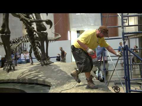 Museum Separates Iconic Battling Dinosaurs in Rotunda