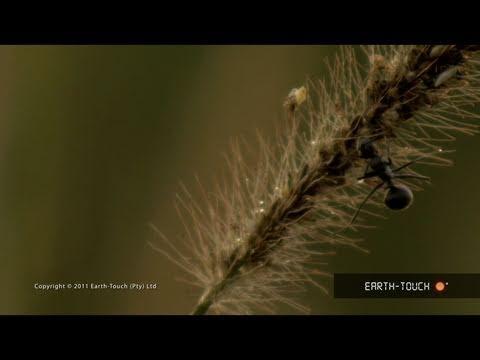Grass sustains life