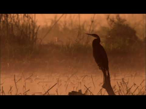 NATURE | Victoria Falls | Life Above the Falls | PBS