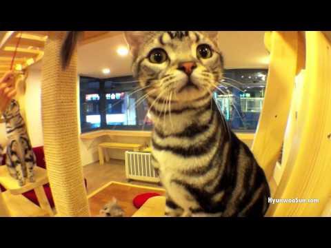 "Playful Kittens | 고양이 카페 ""봄날의 고양이""에서"