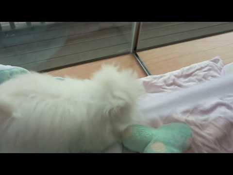Puppy playing with toilet paper