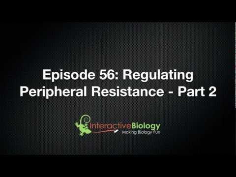 056 Regulating Peripheral Resistance - Part 2