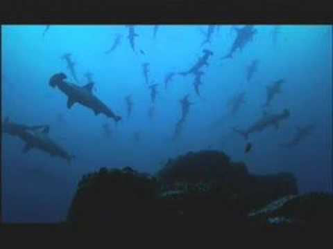 NATURE | Shark Mountain | A Shadow Over the Reef | PBS