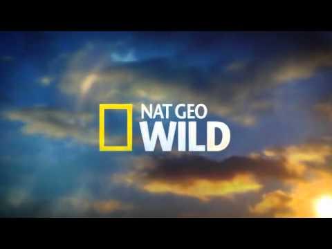 Being Nat Geo Wild