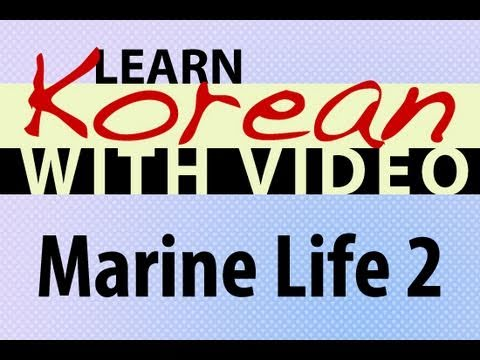 Learn Korean with Video - Marine Life 2