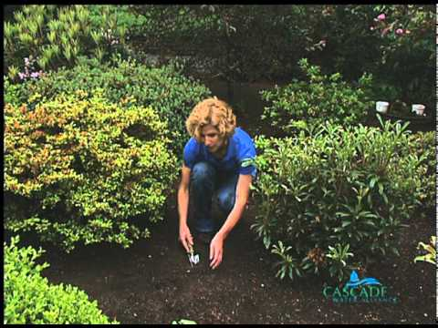 WaterWise Landscapes: Introduction, Soil Types and Plants