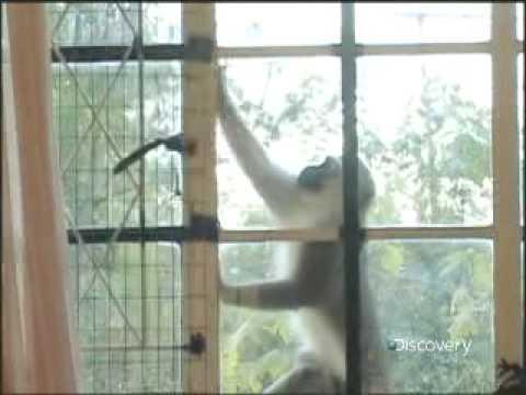 Psycho Monkeys