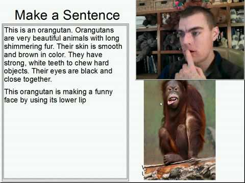 Learn English Make a Sentence and Pronunciation Lesson 97: Orangutan Face