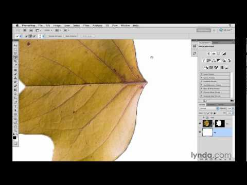 Photoshop tutorial: Using the Refine Mask panel | lynda.com