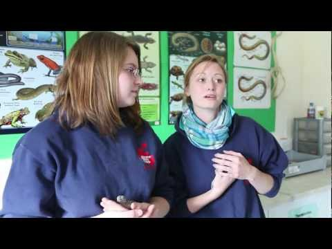 Foundation degree in Animal Behaviour and Welfare
