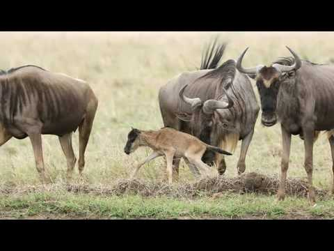 The Coolest Stuff on the Planet - The Masai Mara