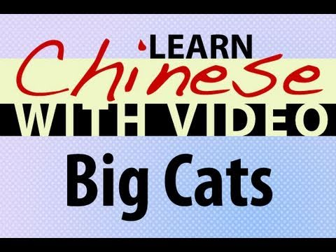 Learn Chinese with Video - Big Cats