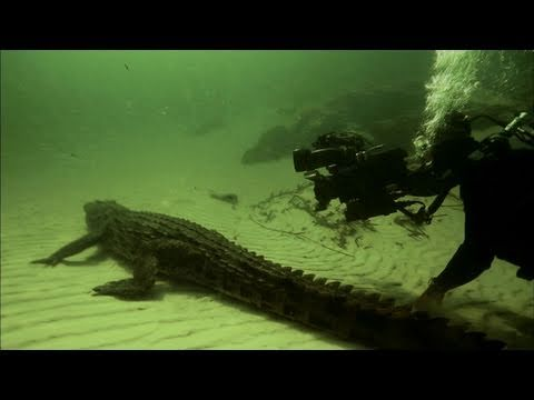 Diving With Crocodiles: Sneak Peek