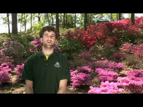 Video Plant Profile with Jon Peter — Rhododendron