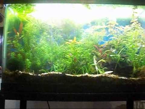 Connecting Aquariums Buffering