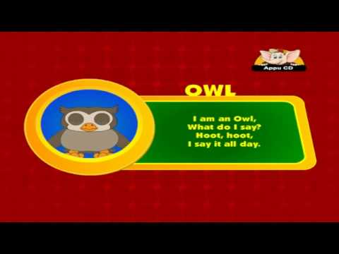 Animal Sounds - Owl