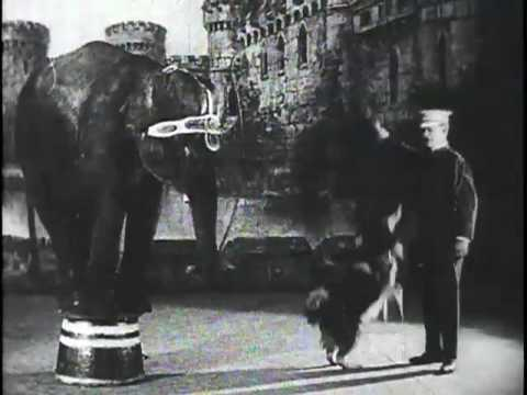Jumbo - The Trained Elephant