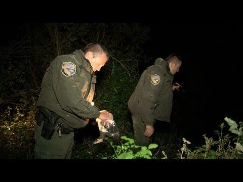 Wild Justice - Baby Salmon Poachers