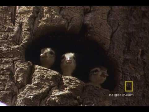 Baby Ducks' First Flight