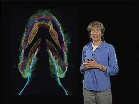 Carolyn Bertozzi (UC Berkeley) Part 2: Imaging the Glycome