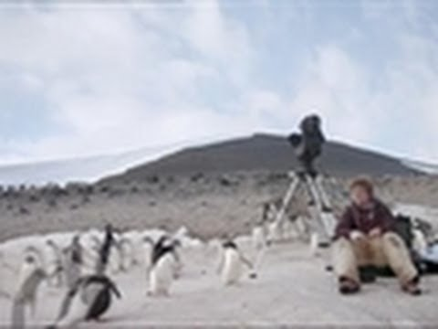 Living With Criminal Penguins | Frozen Planet