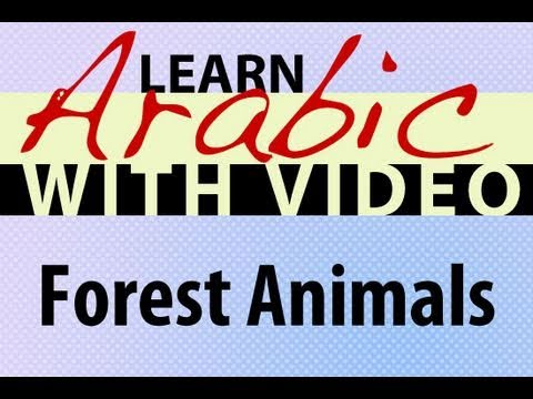Learn Arabic with Video - Forest Animals