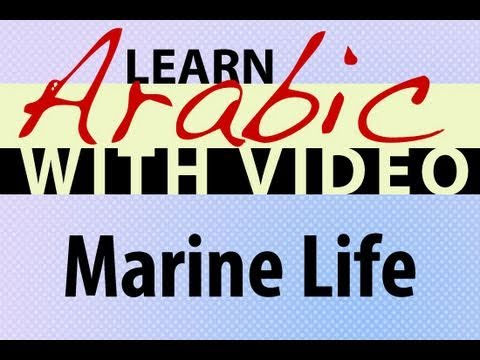Learn Arabic with Video - Marine Life
