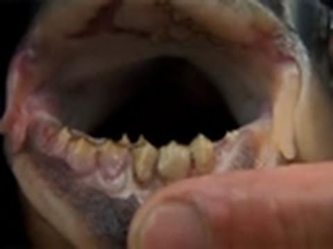 River Monsters: The Mouth of Madness