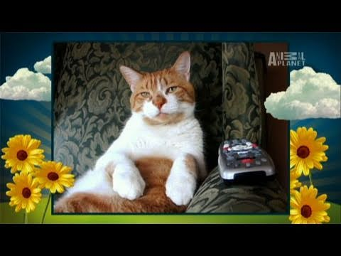 America's Cutest Cat 2010- The Super Bowl of Cute