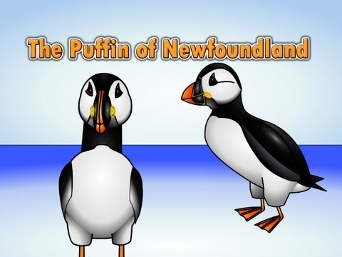 The Puffin Song - Puffin of Newfoundland