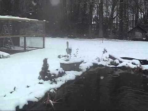 Winterize Pond Tips & Fish Eating Frenzy