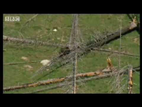 Ice Age Predators - Wild New World - BBC
