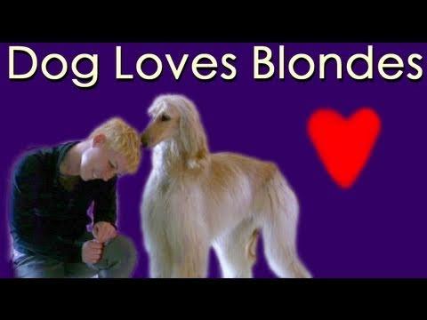 Dog loves Blondes- Husky says I love you