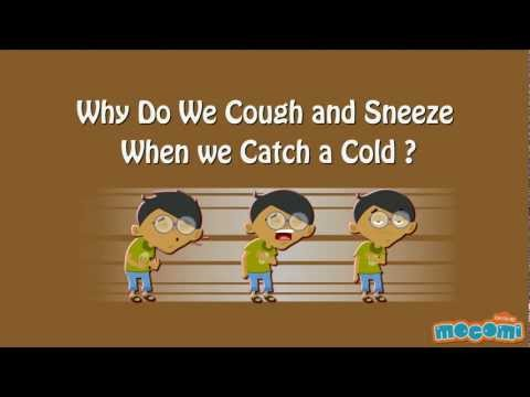 Why Do We Cough and Sneeze?