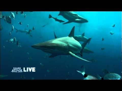 'Shark Attack Experiment LIVE' - High-Tech Underwater Cameras